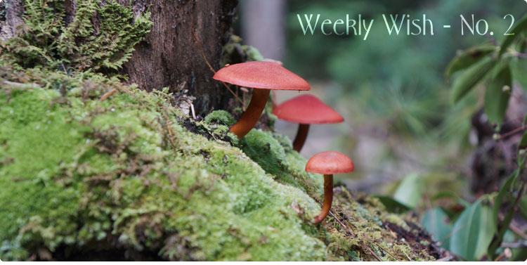 weeklywish2