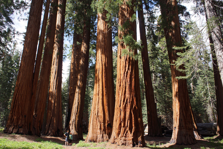 The Founders Group, Sequoia NP
